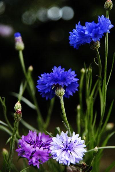 Детства моего цветы…